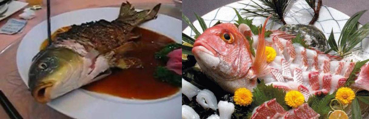 Kazikuri and ying yang fish